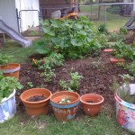 garden_pic_19May11