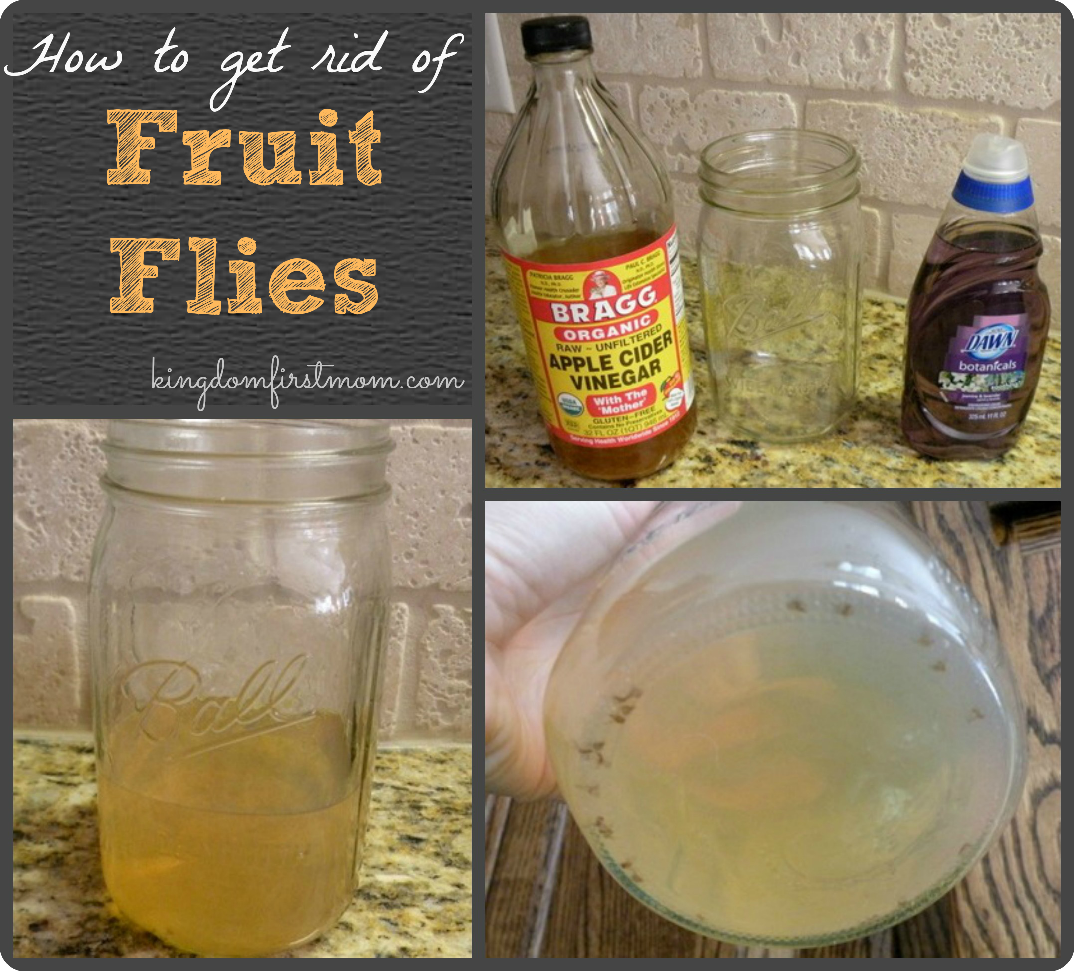 fruit salsa recipe how to get rid of fruit flys