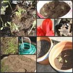 Gardening-Attempt-1