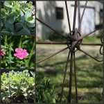 Springing--New-Life