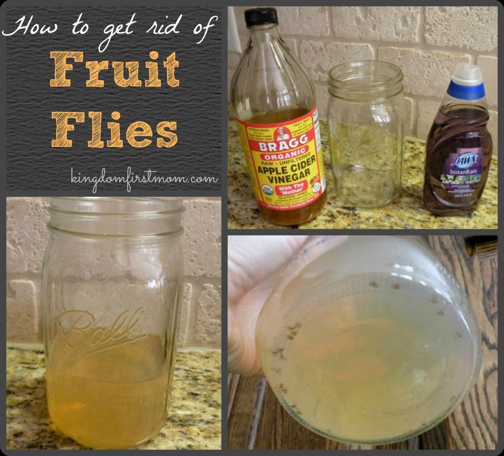 Natural Way To Get Rid Of Fruit Flies