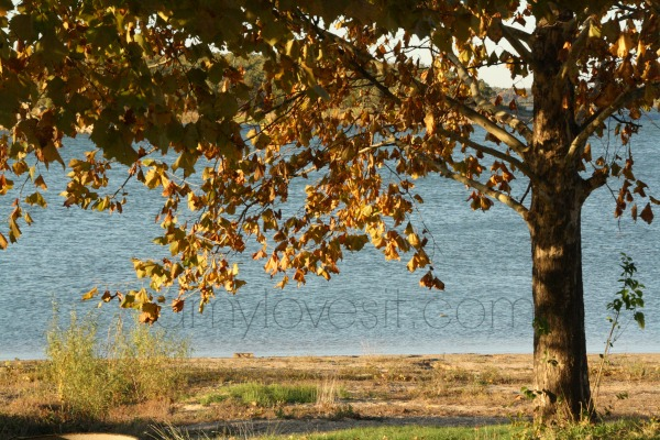Lake Murray in Fall